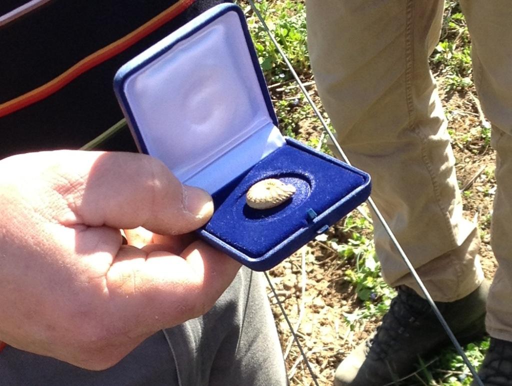 Ammonit aus dem Lias. Gefunden von Volker Knörzel.