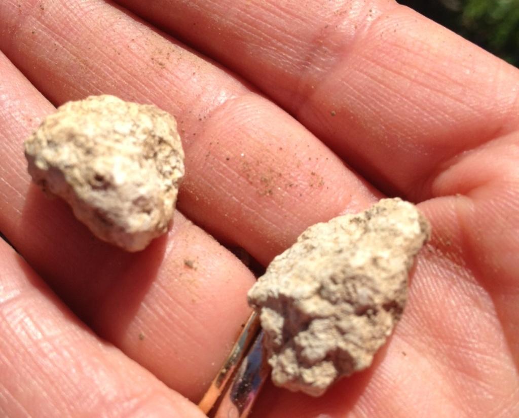 Muschelkalkstein aus dem Trias, ca 240 mio J.