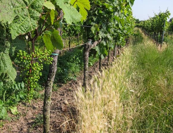 Summer vines © Lars O Larsson