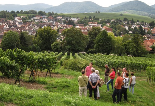 Blick auf Ilbesheim, Weinbergstour mit Boris Kranz © LL www.kingscreek.de