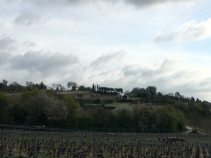 27. April Gimmeldingen Weinberge